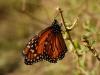 Detalle de una mariposa.