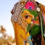 El festival del elefante, la joya de Jaipur