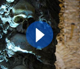 (Español) Évora:  Entre huesos y cráneos