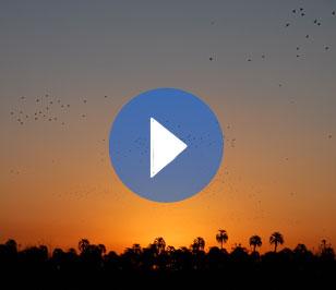 Capítulo 10. Venerando al sol entre palmeras