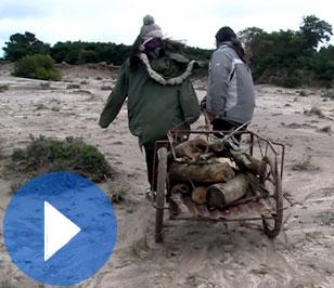 (Español) 60. Recuperamos el monte nativo en Punta Rubia