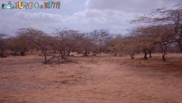 Trupillos en las carreteras de la Alta Guajira