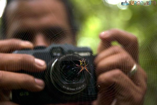 El Carlos pren una fotografia d'una de les aranyes que habiten els voltants de la llacuna Limoncocha