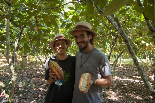 Cacao en Chazuta