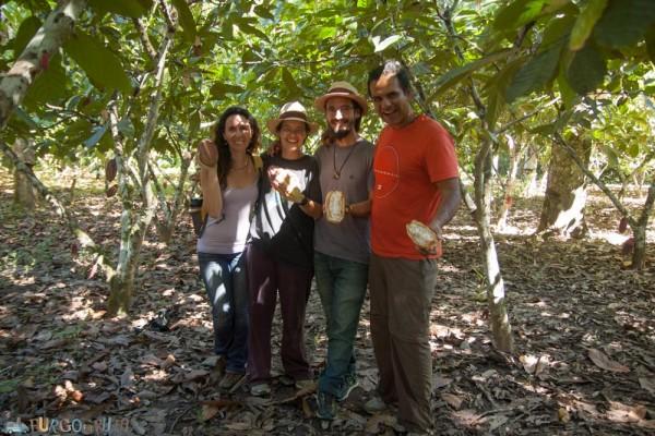 Plantación de cacao cerca de Chazuta