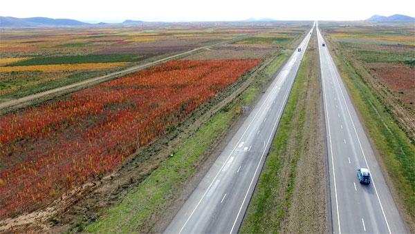 Detalle de los cultivos de quinua en la carretera que va de Oruro a La Paz