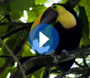 N.P. Corcovado, one of the most biodiverse places in the world