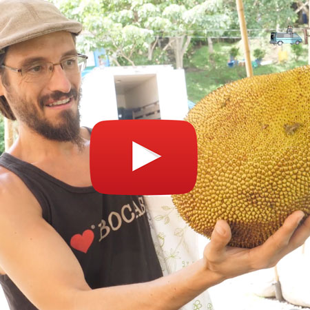 Costa Rican Markets: Green Fair and Market El Registro